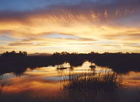 A beautiful sunrise over the Prado wetlands